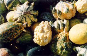 Fall-squash-10529-m
